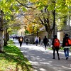 konsultan kuliah di university of toronto