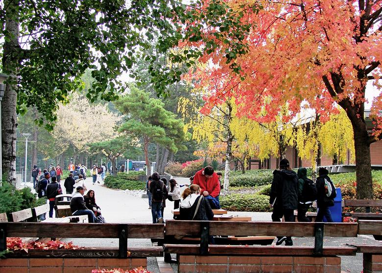 biaya kuliah di shoreline community college amerika